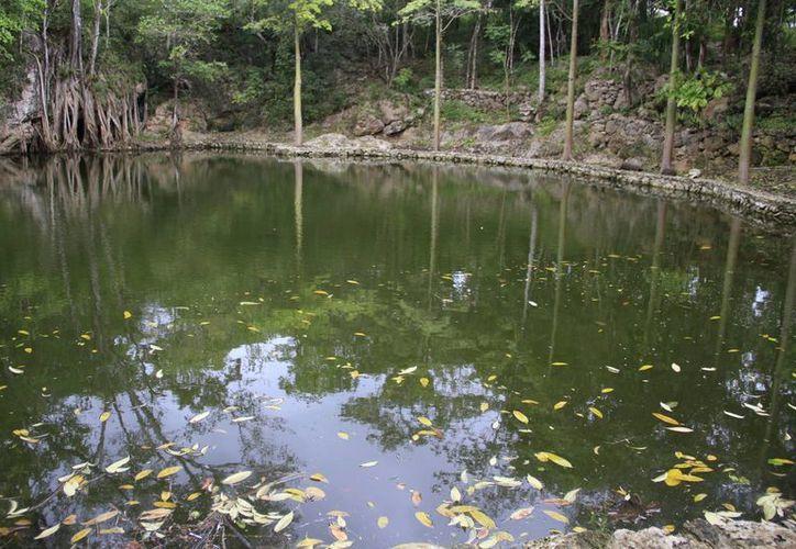 El sábado 30 de abril, la Reserva Toh, ubicada en la Ruta de los Cenotes, organiza diversas actividades para los infantes, que incluye un recorrido en la zona para que aprendan de flora y fauna de la selva baja. (Luis Soto/SIPSE)