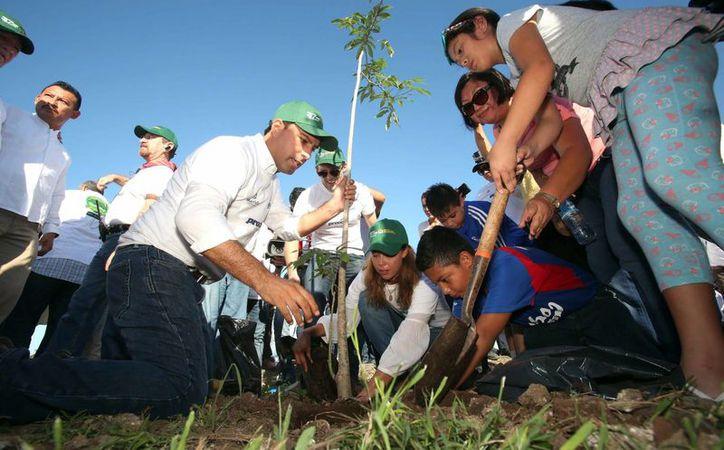 El alcalde de Mérida, Mauricio Vila Dosal plantó algunos de los árboles en la jornada de reforestación realizada el sábado, en Gran Santa Fe. (SIPSE)
