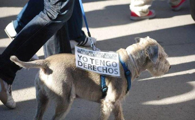 Al congreso asistieron 500 personas expertas en el tema del bienestar animal entre veterinarios, científicos, activistas y estudiantes. (Contexto/Internet)