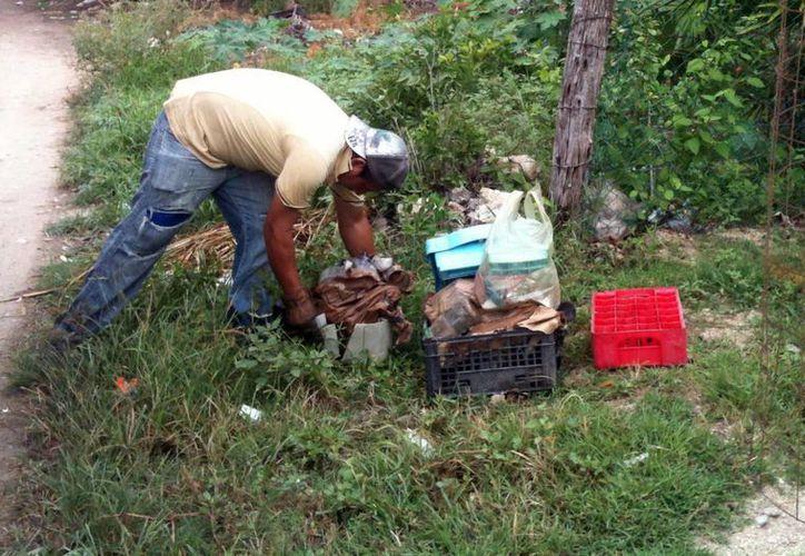 La descacharrización es fundamental para el combate al mosquito que transmite el dengue. (Milenio Novedades)