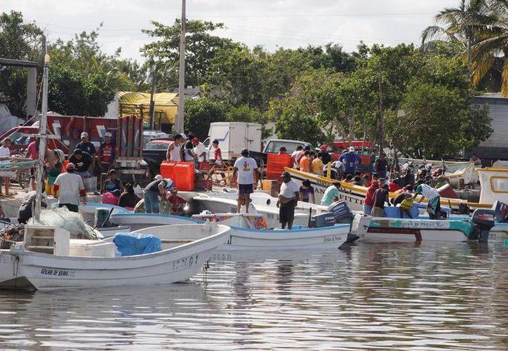 Se disparan los precios del mero y del negrillo porque los hombres de mar han tenido baja captura. (SIPSE)
