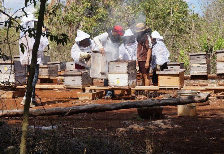 El centro ubicado en la cabecera municipal ha logrado acopiar, tan solo tres tambos de miel que equivalen a unos 200 kilos.  (Benjamín Pat/SIPSE)