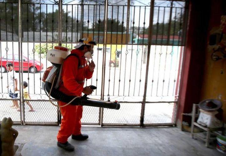 Una mujer de 33 años, de Mérida, contagiada con el virus del zika, es el primer caso autóctono de la enfermedad en Yucatán. Autoridades recuerdan que el dengue hemorrágico representa un peligro mayor que el zika. En la foto, de contexto, abatización contra el mosco transmisor. (Milenio Novedades)
