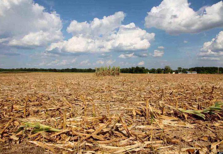 La degradación de la tierra en los últimos 60 años abarca 142 millones de hectáreas de un total de casi 200 millones. (Archivo SIPSE)