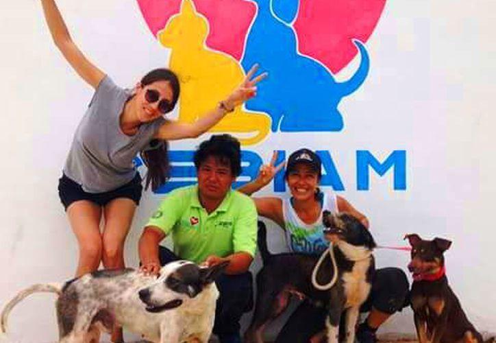 integrantes de Voluntarios Perrunos acuden al Cebiam para sacar a pasear a los perros que permanecen encerrados. (Foto: Daniel Pacheco/SIPSE)