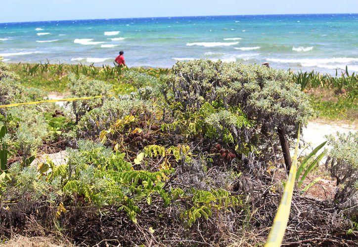 En la zona afectada, había riñonina y uva de mar, vitales para la recuperación de la duna costera. (Foto: Octavio Martínez)