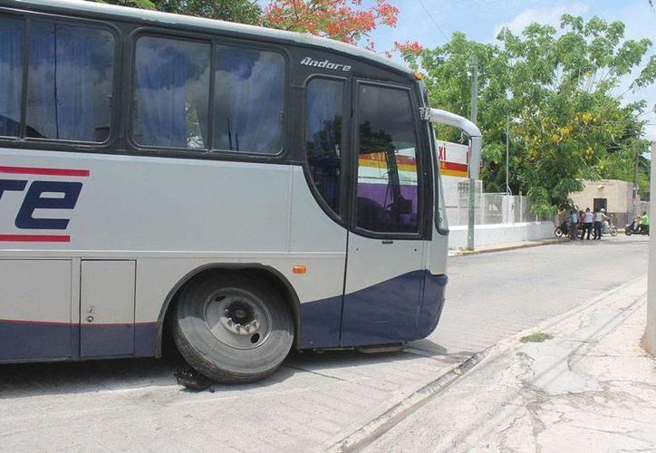 Un autobús de pasajeros de la ruta 'Noreste' que salía de la terminal de Motul perdió una de sus llantas cuando intentaba dar una vuelta. No hubo heridos, pero los pasajeros se llevaron un buen susto. (Milenio Novedades)