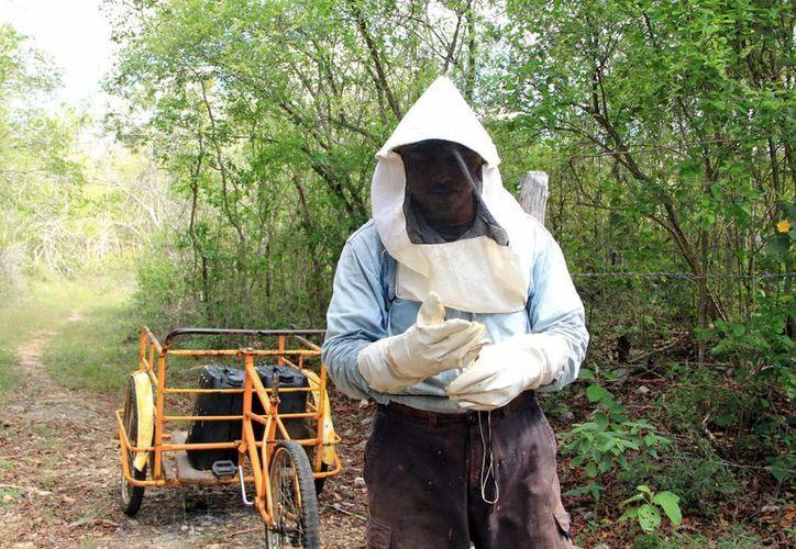 Los transgénicos contaminan la miel, que luego es rechazada. (José Acosta/SIPSE)