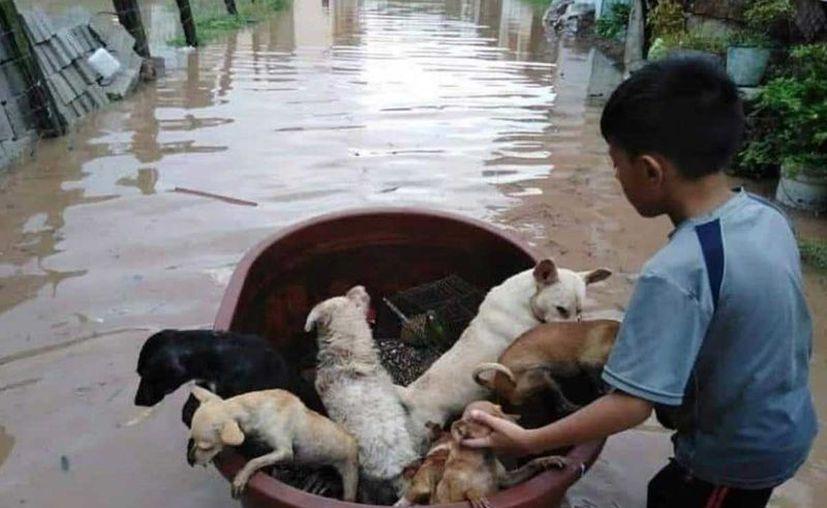 Jostyn Dilan realizó la heroica labor con una tina en donde logró juntar a Siete perros, un cotorro y un gallo. (Excélsior)