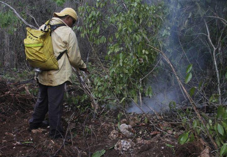 Los elementos de la Comisión Nacional Forestal luchan contra los incendios. (Israel Leal/SIPSE)