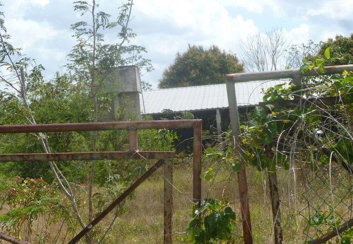 La planta abandonada se ubica a dos kilómetros por el rumbo de El Ideal. (Raúl Balam/SIPSE)