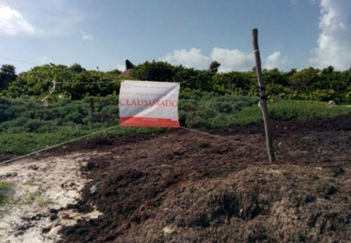 En el lugar se observó la remoción de sargazo y arena en la zona de playa. (Redacción)