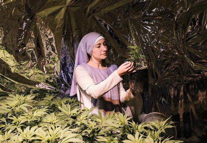 La ley estatal solo les permite a las Hermanas del Valle cultivar 12 plantas de marihuana. (facebook.com/sistersofthevalley)
