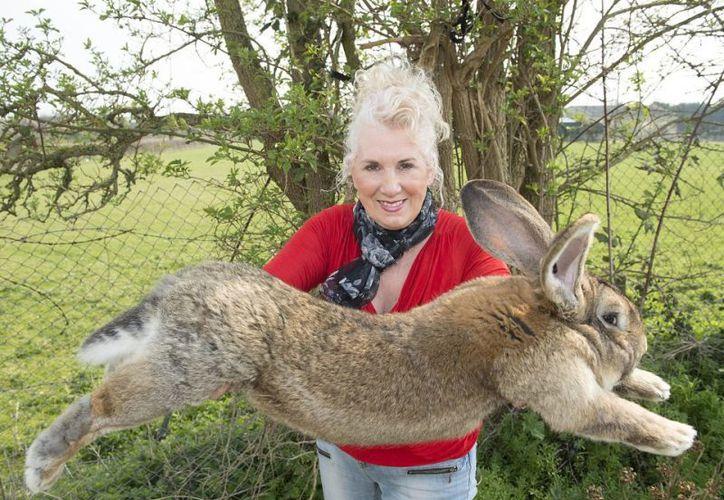 """La criadora precisó que ya había enviado conejos """"a todas partes del mundo"""" y que """"nada así"""" había ocurrido nunca. (El Debate)"""