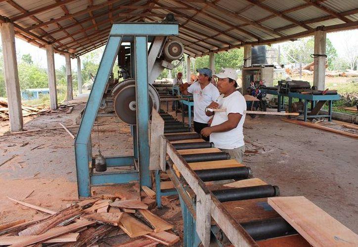 La inciativa busca proteger la integridad de los trabajadores que desempeñan actividades de aprovechamiento forestal maderable. (Edgardo Rodríguez/SIPSE)