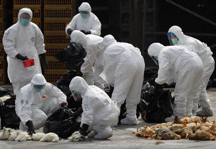 La medida fue ordenada por las autoridades de la oficina de Alimentos y Salud de Hong Kong tras el descubrimiento del virus H7N9 en aves. (Agencias)