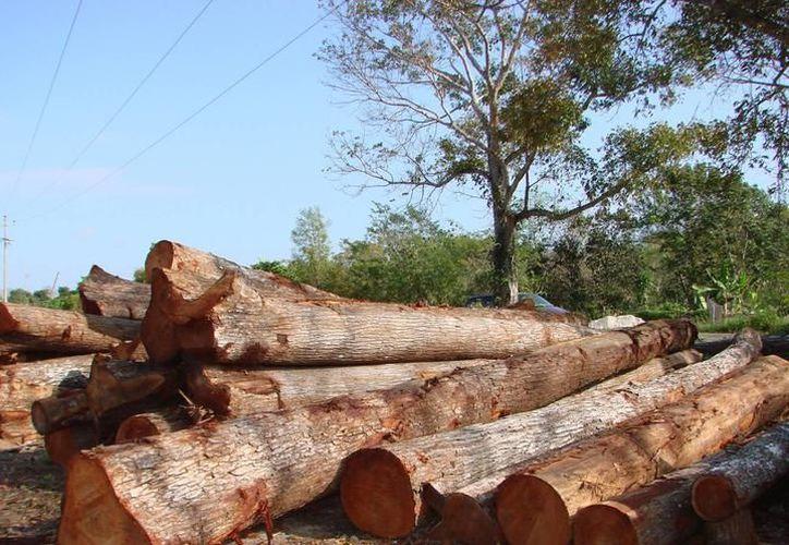 Se expondrá todas las consecuencias negativas que deja el daño a los árboles. (Foto: Contexto/SIPSE)