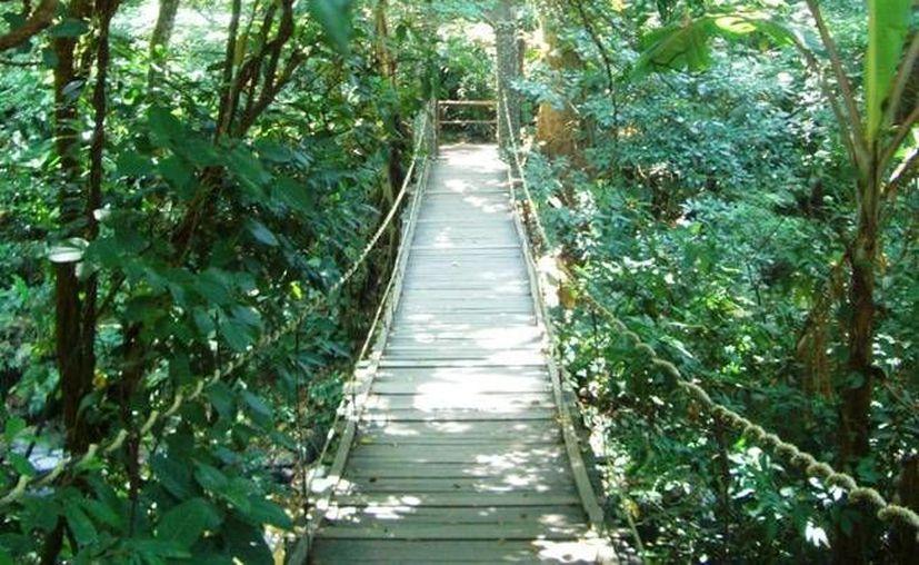 Nanciyaga se localiza a 7 kilómetros de Catemaco y es una reserva ecológica de 4 hectáreas de selva tropical. (catemaco.info)