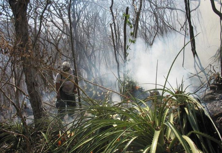 Brigadas del ejecutivo estatal luchan contra las llamas en Chiapas. (Gobierno de Chiapas)