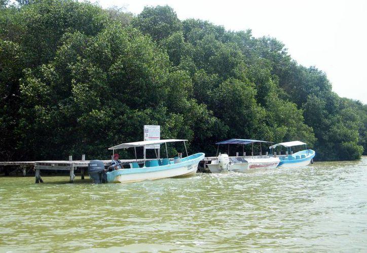 Yucatán cuenta con gran riqueza en los ecosistemas costeros. (Milenio Novedades)