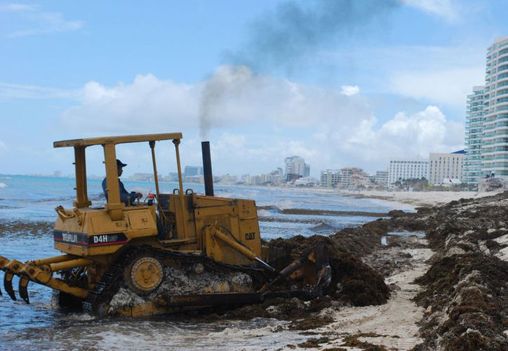 Se prevé que este año sea histórico el arribo del sargazo a las costas del estado. (Redacción/SIPSE)