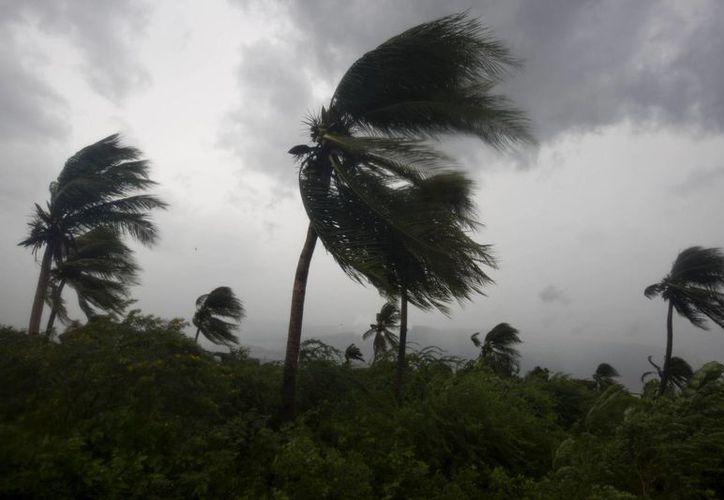 El viento que acompaña al huracán Matthew dobla varios cocoteros cerca de Puerto Príncipe, Haití. (AP/Dieu Nalio Chery)