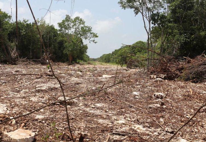 La próxima administración  analizará el uso de suelo que pretenden algunos particulares para explotación minera. (Adrián Barreto/SIPSE)