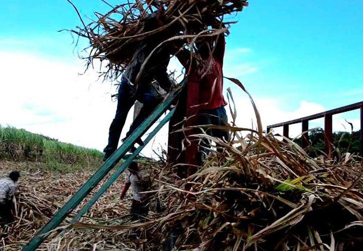 """La importación con """"dumping"""" de la fructuosa está afectando a los cañeros con más de 500 millones de dólares. (Foto: Juan Rodríguez / SIPSE)"""