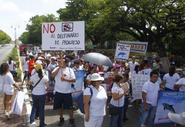 El fin de la marcha era difundir la ley que ampara a los animales y concientizar acerca del maltrato. (Christian Ayala/SIPSE)