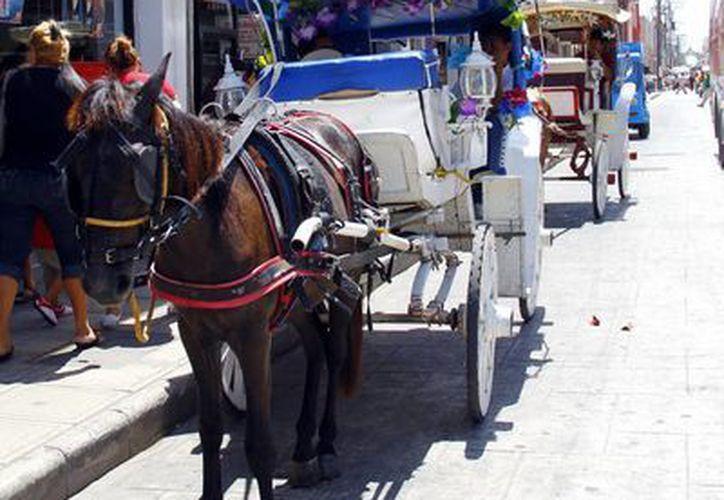 Los equinos del Centro Histórico recibirán mejores cuidados  y alimentación. (SIPSE)
