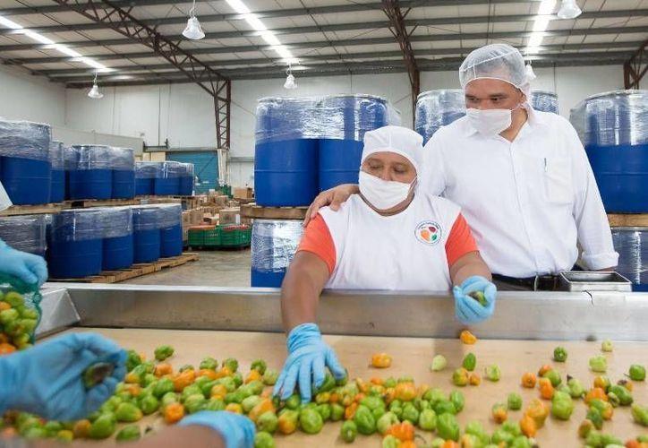 El Gobernador visitó a la firma yucateca Industria Agrícola Maya, en la carretera Conkal-Chablekal, para constatar cómo ha mejorado su infraestructura con apoyo gubernamental. (Cortesía)
