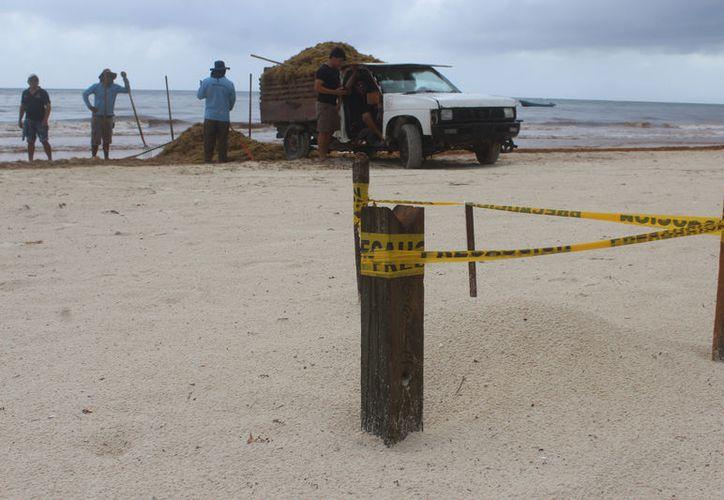 El conteo de nidos de las especies cahuama y tortuga blanca se hizo en las playas de Akumal y de Tulum. (Foto: Sara Cahuich/SIPSE)