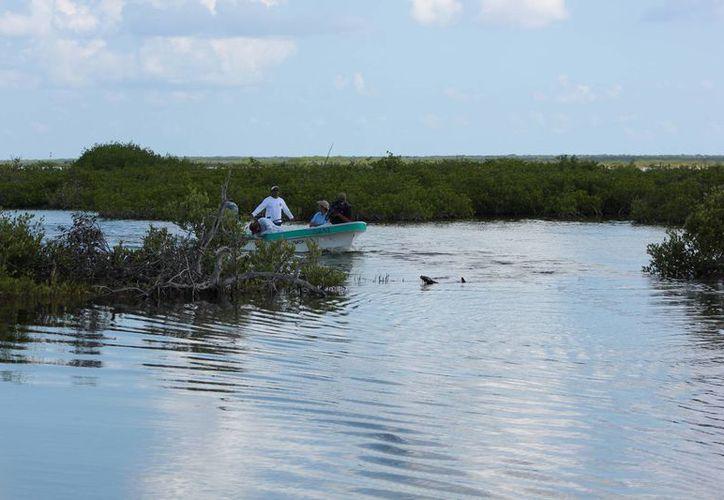 Pescadores tratan de controlar la población del pez león. (Gustavo Villegas/SIPSE)