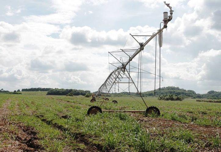 Los sistemas de riego se encuentran abandonados, saqueados e inutilizables. (Edgardo Rodríguez/SIPSE)