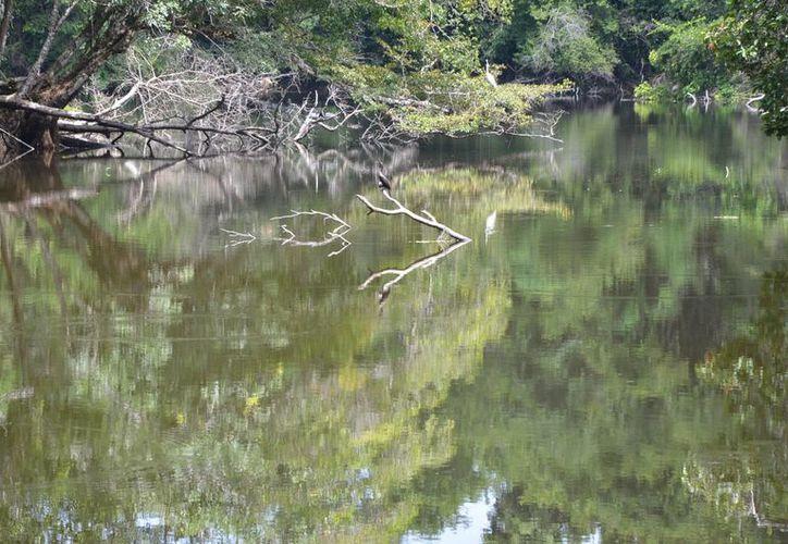 Conafor promueve la protección de la riqueza forestal del estado.(Juan Rodríguez/SIPSE)