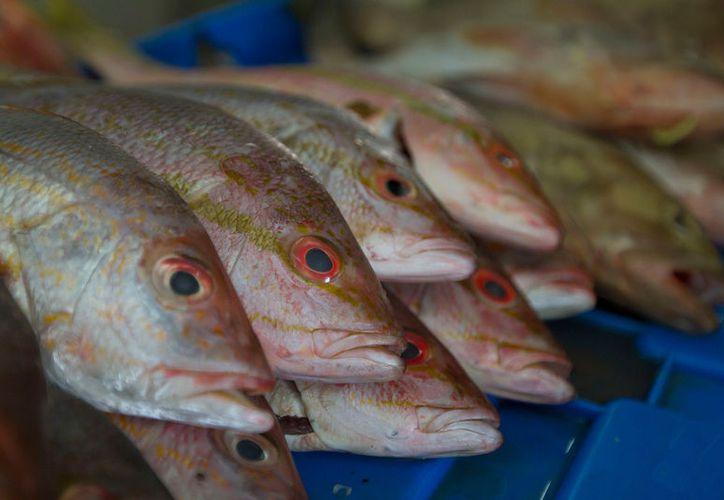 Profeco inició en Yucatán el operativo Cuaresma para verificar precios de pescados y mariscos, y evitar abusos de los comerciantes. (Archivo/NTX)