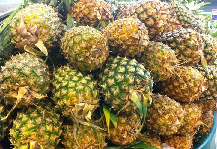 Aumenta producción de piña en Quintana Roo. (Israel leal/SIPSE)