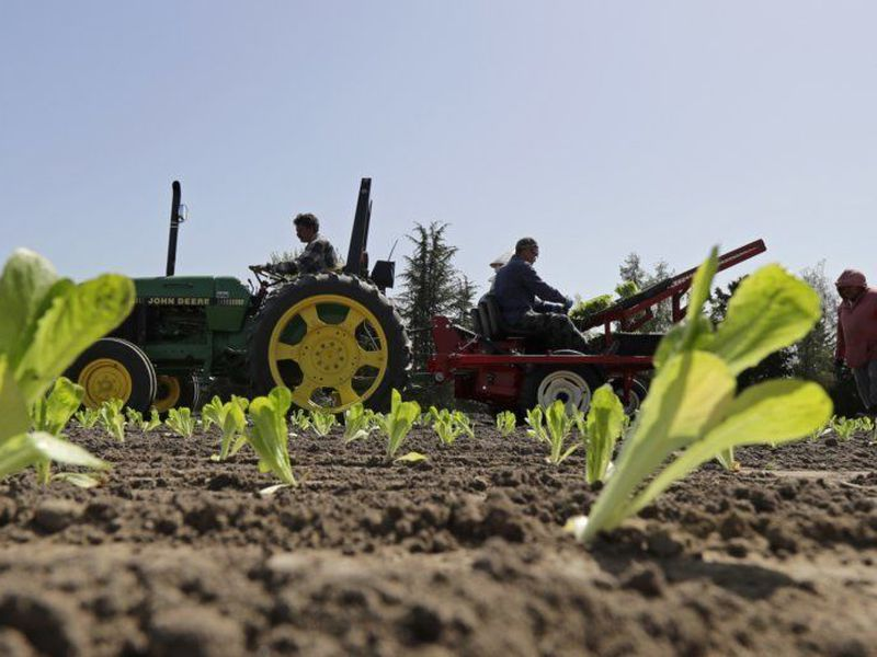 At many restaurants around the country, romaine is still on the menu. (AP)