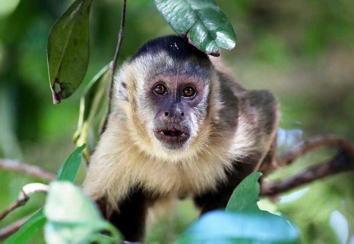 Personal del Zoológico de Chapultepec llegó al lugar para realizar el rescate del mono. (monkeyworlds)