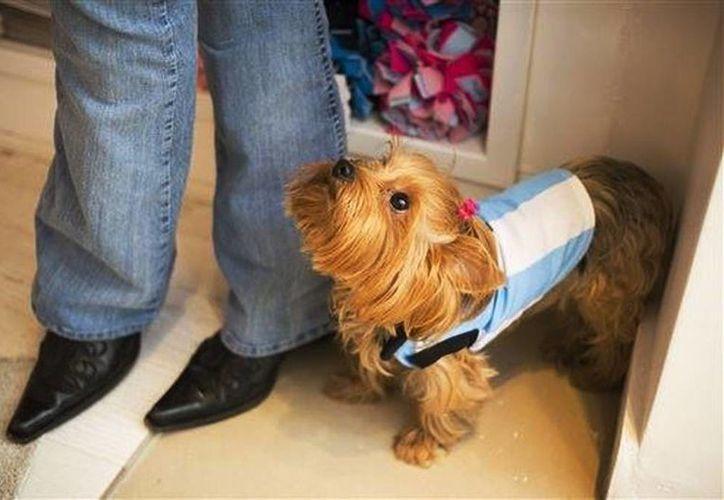 Las camisetas de la selección albiceleste para perros, así como gorros de arlequín, faldas de tul, juguetes y bufandas se venden a precios que van de los siete a los 30 dólares. (AP)