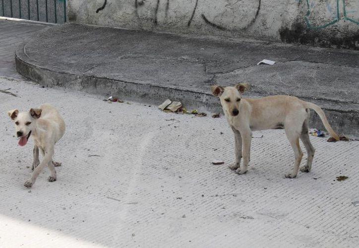 Invitan a la población a llevar a sus mascotas con 12 horas de ayuno para su operación. (Israel Leal/SIPSE)