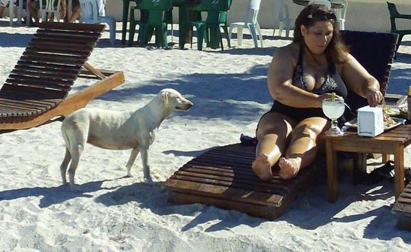 Los turistas se conmueven y alimentan a los perros callejeros. (Manuel Pool/SIPSE)