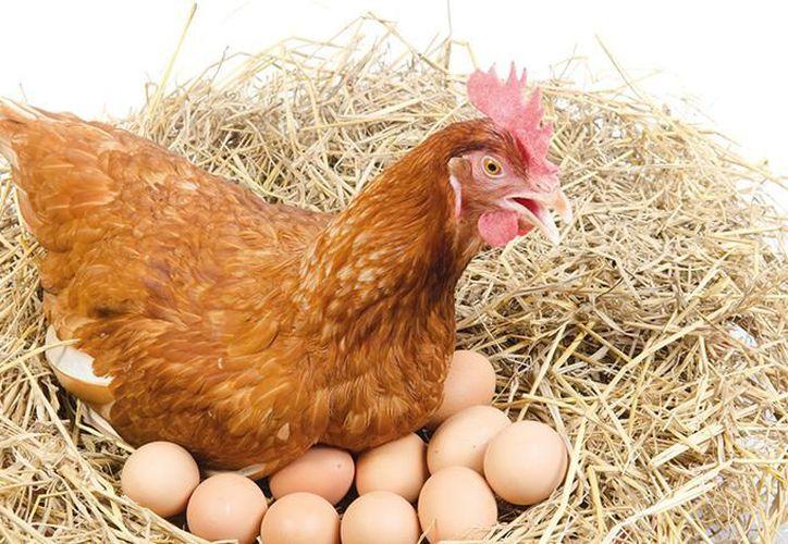 El 'huevo de patio' al ser criado de manera natural y sin químicos, tiene como resultado un alimento más saludable. (Foto: Internet).