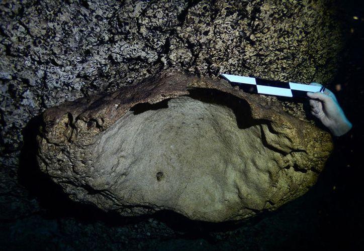 La colonia de coral mide mide aproximadamente 90 centímetros de diámetro. (Erick Sosa Rodríguez/ Seduma)