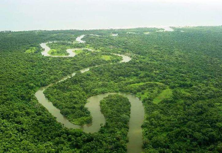 Biósfera del Río Plátano en Honduras. (Internet)