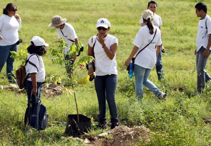 En fraccionamientos grandes de Mérida hay escasez de árboles. (SIPSE/Archivo)