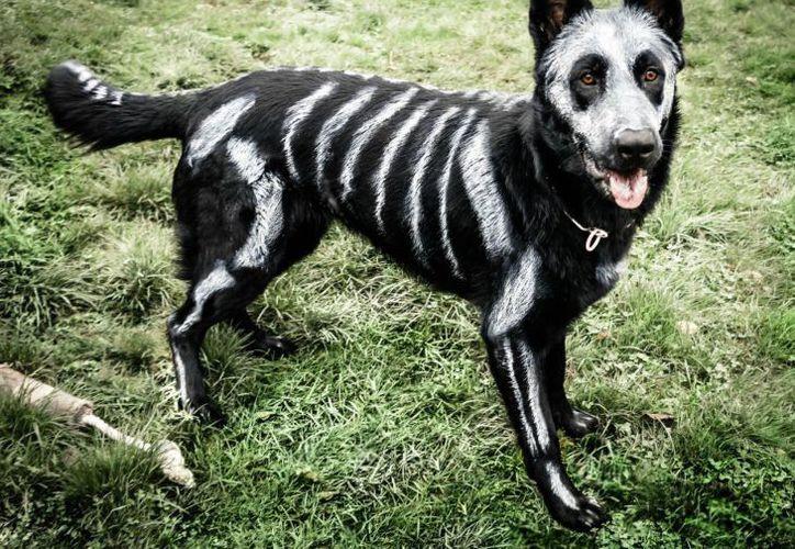 El 22 de octubre realizarán un altar para las mascotas difuntas en Cancún. (Contexto/Internet).