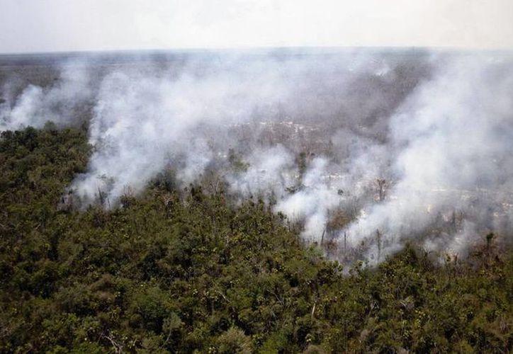 El incendio se registró en las inmediaciones del ejido Altos de Sevilla. (Cortesía/Conafor)