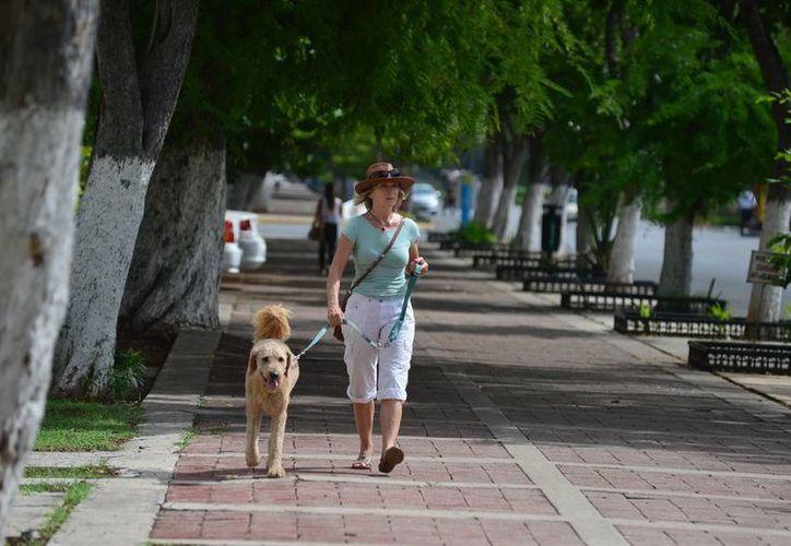 Los meridanos aprovecharon para pasear en el domingo caluroso y nublado. (Luis Pérez/SIPSE)