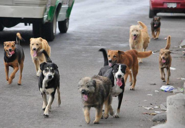 El alimento captado es enviado a distintas organizaciones de rescatadores de canes. (Contexto/Internet)